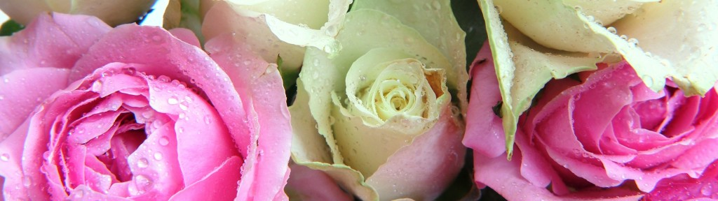 Enticing scent of roses